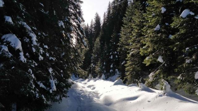 Тропа в снегу